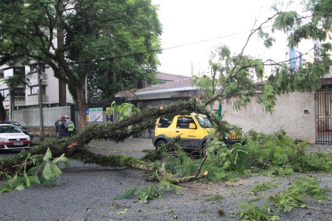 Árvore Rua do Herval