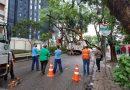 Rua Carneiro Lobo Árvore
