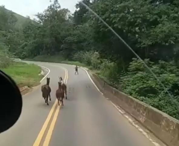 Cavalos Estrada da Ribeira